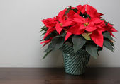 Poinsettia on a Table — Stock Photo