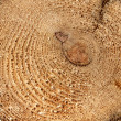 Tree Rings Close-up — Stock Photo