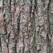 Stock Photo: Texture of tree trunk