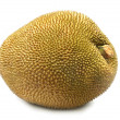 Royalty-Free Stock Photo: Giant jackfruit