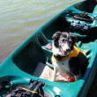Stock Photo: Dog in Canoe wearing Life Jacket