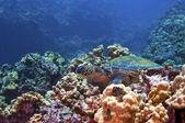 Green Sea Turtle — Stock Photo