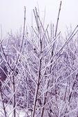 Rama de invierno — Foto de Stock