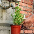 Watering a pot — Stock Photo #4460355