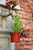 Watering a pot — Stock Photo