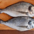 Stock Photo: Two gilthead fish