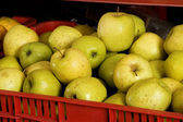 červený rámeček s čerstvá zelená jablka — Stock fotografie