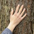 Hand touches a tree — Stock Photo