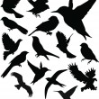 set birds.vector — Stock Vector