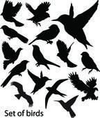 Nastavit birds.vector — Stock vektor