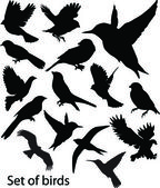 Conjunto birds.vector — Vector de stock