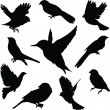 Set Birds.Vector — Stock Vector #4272968