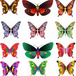 Set of different multicolored butterflies — Stock Photo