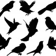 Set Birds.Vector - Stockvektor