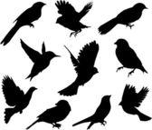 Ställa in birds.vector — Stockvektor