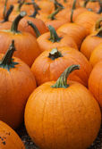 Lots of Pumpkins — Stock Photo