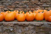 Pumpkins stone wall — Stock Photo