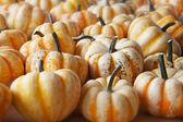 White Yellow Pumpkin Squash — Stock Photo