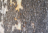 Bark mosaic — Stock Photo