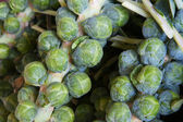 Brussel sprout stalks — Stock Photo