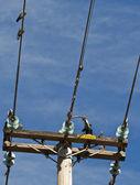 最接近的电源线上的鸽子 — 图库照片