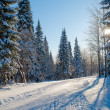 Winter, sunny day in the woods — Stock Photo