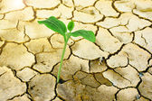 New Growth Through Cracked Earth — Stock Photo