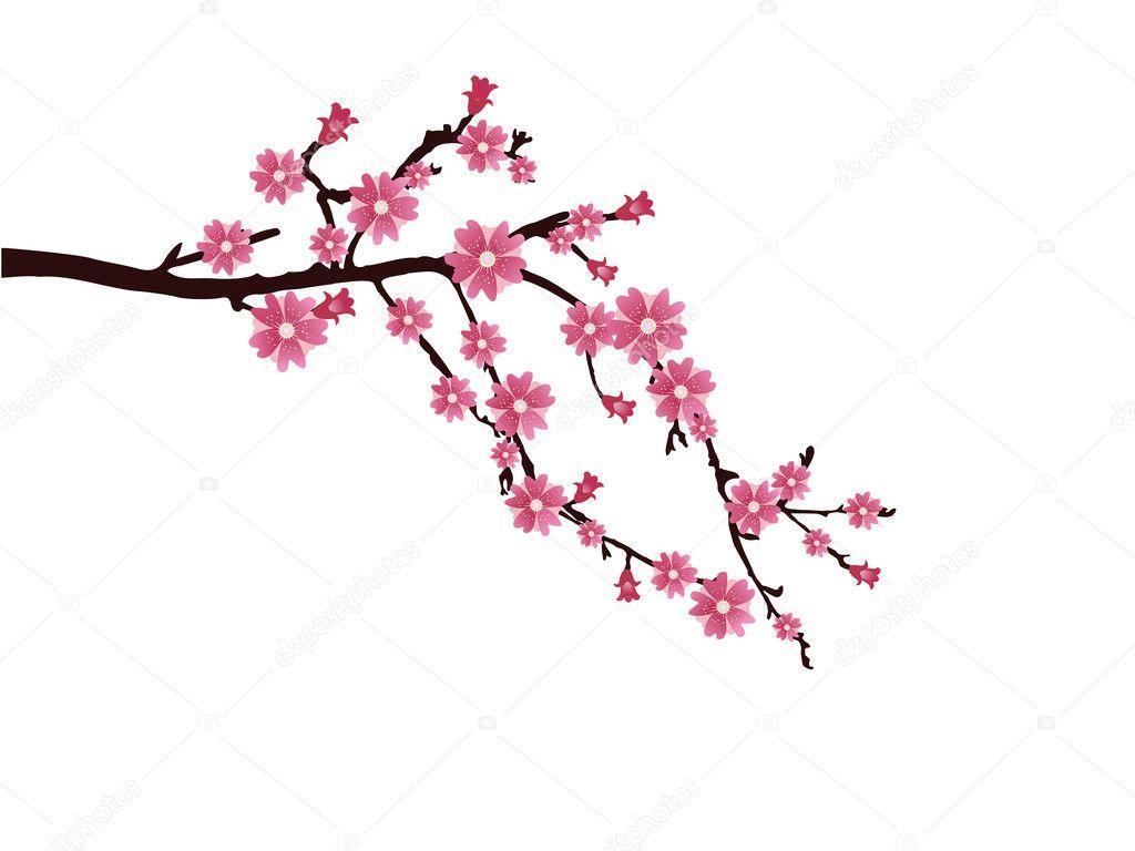 Flor de cerejeira     Vetor de Stock   169  andreakaulitzki  5064225