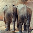 Elephants — Stock Photo #4206715