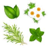 Aroma Herbs — Stock Vector