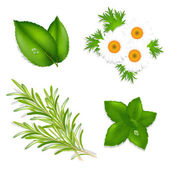 Herbes aromatique — Vecteur