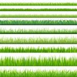 Big Set Grasses — Stock Vector