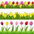 confini di fiore — Vettoriale Stock