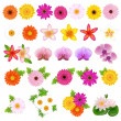Beautiful Flowers - Stock Vector
