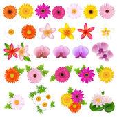 Güzel çiçekler — Stok Vektör