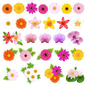 Beautiful Flowers — Stock Vector