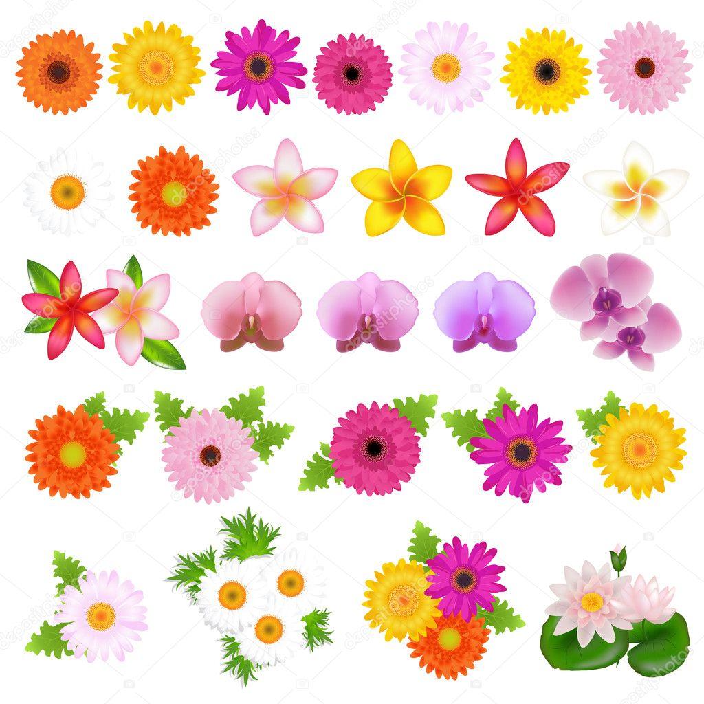 посмотреть цветы картинки:
