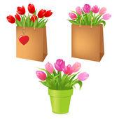 Tulips In Package — Stock Vector
