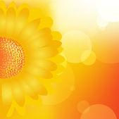 Slunečnice pozadí — Stock vektor
