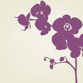 Orchid — Stock Vector