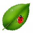 Ladybird On Leaf — Stock Vector