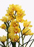 Pianta, fiore, orchidea, — Foto Stock