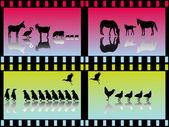 Molti gruppi animali — Vettoriale Stock