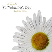 Valentine's Day Chamomile Card — Stock Photo