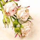 Rose with Buds Card — Stock Photo