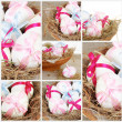 Royalty-Free Stock Photo: Easter Festive Collage