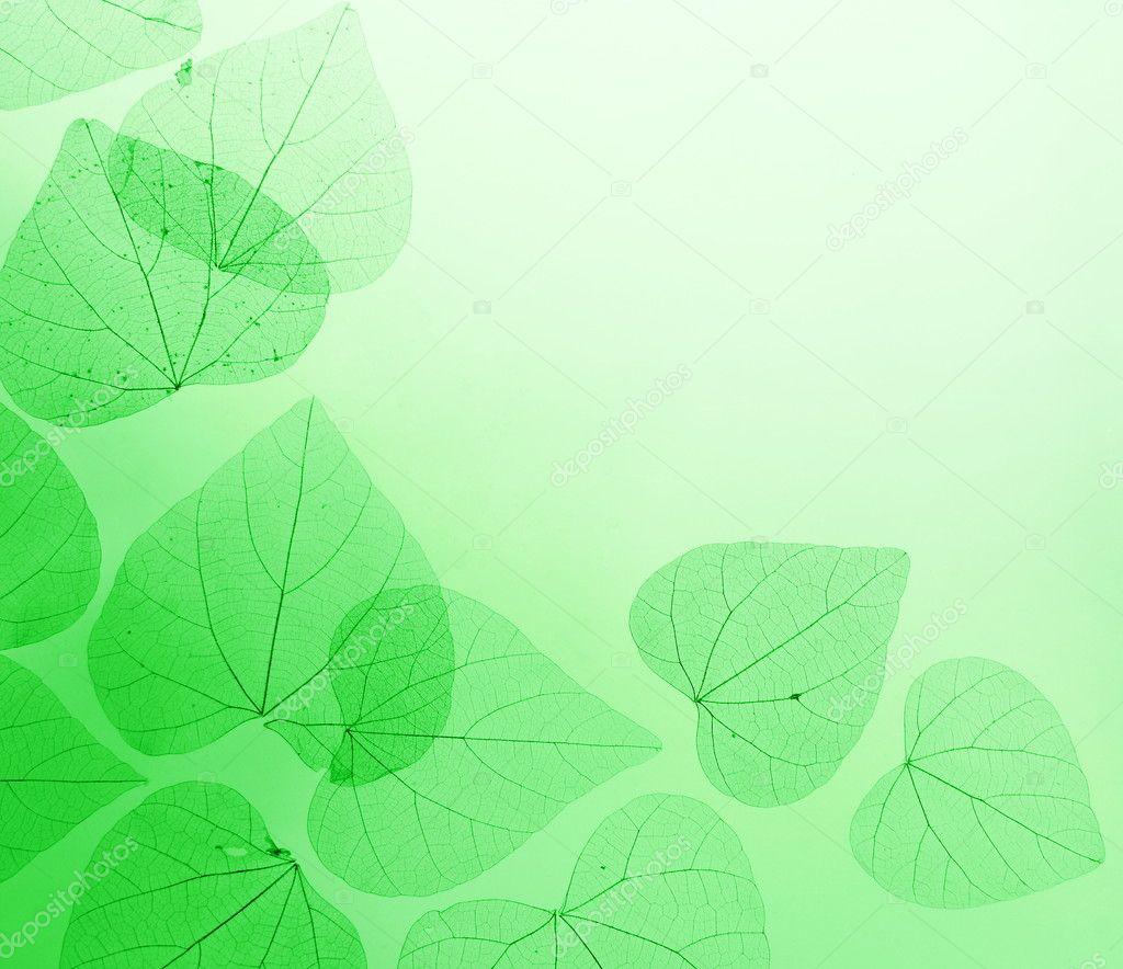 用叶子花边框 — 图库照片08nataliia#5377016