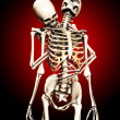 Caught By A Skeleton — Stock Photo