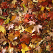 Autumn forest leaves — Stock Photo
