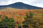 Autumn forest — ストック写真